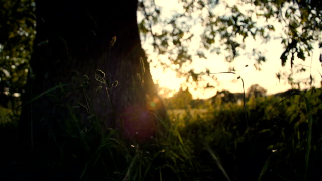 Under An English Oak Tree At Sunset video