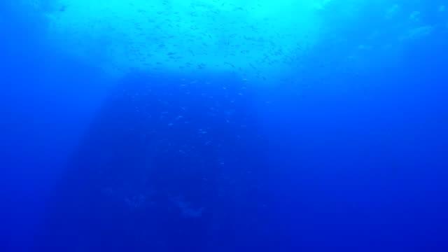 under havet pinnacle med fiskstim - bergsrygg bildbanksvideor och videomaterial från bakom kulisserna