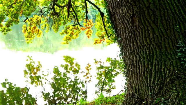 Under the oak tree video