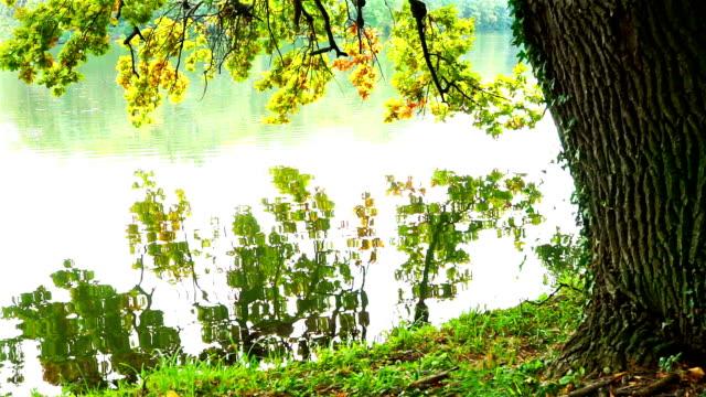 vidéos et rushes de sous l'oak tree - lac reflection lake