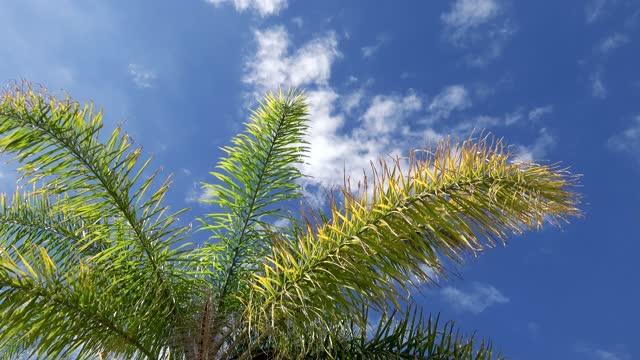 unter der palme mit blick auf den blauen himmel und weiche wolken - faul ast stock-videos und b-roll-filmmaterial