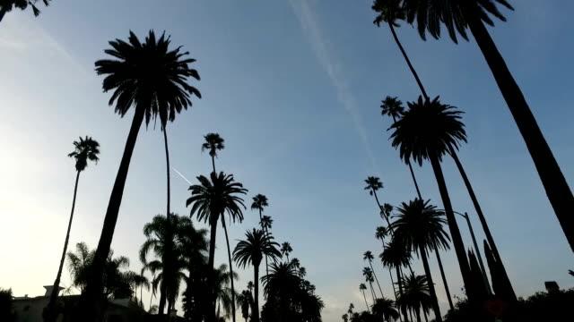 pod palmami - palm tree filmów i materiałów b-roll