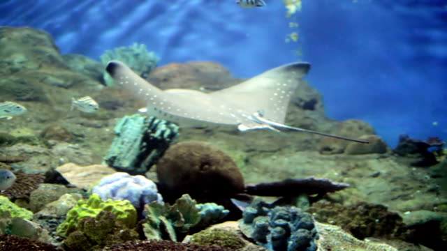 Under water aquarium fish tank video