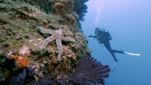 Under water shot of Starfish and Scuba diver in Mediterranean Sea Clip shows starfish in foreground, diver in the back. Later on camera passes starfish and moves towards scuba diver. aqualung diving equipment stock videos & royalty-free footage