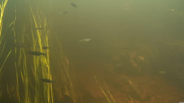 Under water view of the video