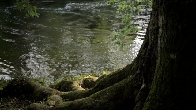 Underneath Old Oak Tree By Quiet Riverside video