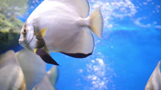 sjökabel och fisk - akvarium byggnad för djur i fångenskap bildbanksvideor och videomaterial från bakom kulisserna