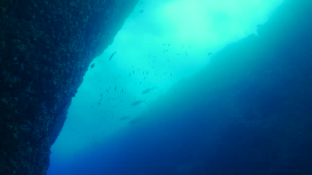 canyon sottomarino nell'isola di ogasawara, giappone - canyon video stock e b–roll