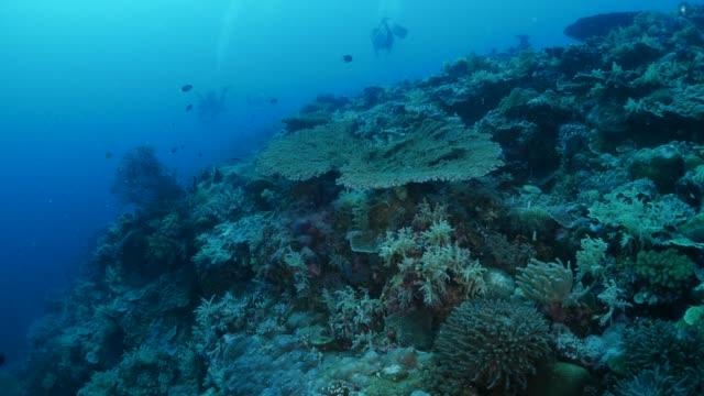 vídeos y material grabado en eventos de stock de arrecife de coral submarino, palau - sea life park