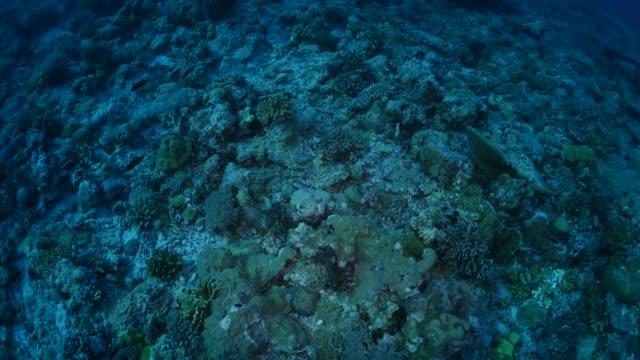 vídeos y material grabado en eventos de stock de arrecife de coral submarino, palau - zona pelágica