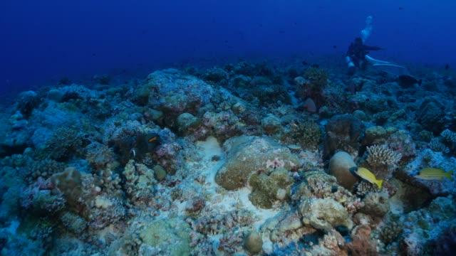 vídeos y material grabado en eventos de stock de arrecife de coral submarino, palau - micronesia