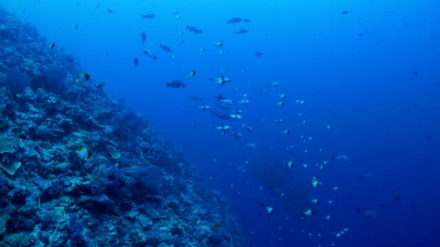 vídeos y material grabado en eventos de stock de marino arrecife de coral, de peces, palau - sea life park