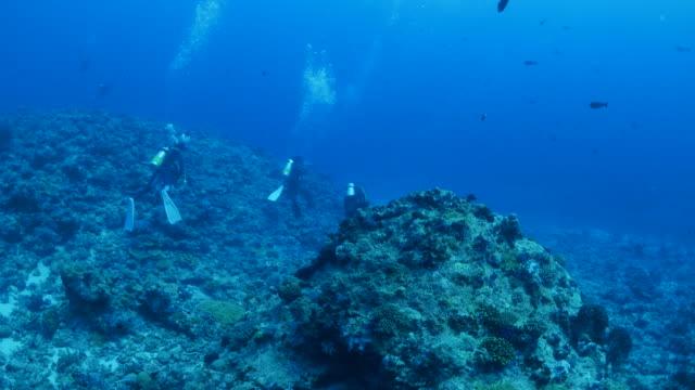 vídeos y material grabado en eventos de stock de arrecife de coral submarino - micronesia