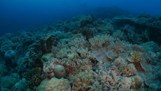 vídeos y material grabado en eventos de stock de arrecife de coral submarino - palaos