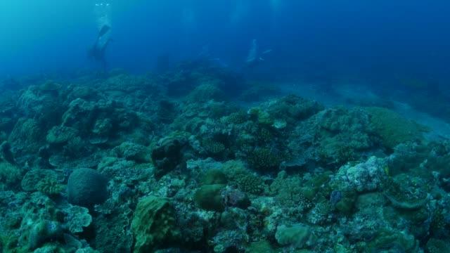vídeos y material grabado en eventos de stock de arrecife de coral submarino - sea life park