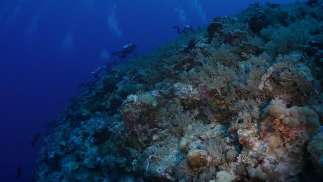 vídeos y material grabado en eventos de stock de submarina buceo, arrecifes de coral, blue corner, palau - zona pelágica