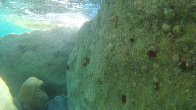 undersea  fantasy Stone and wild