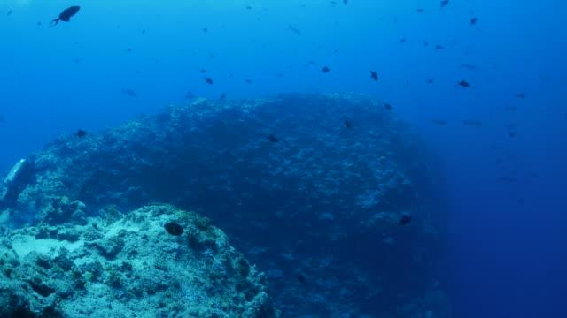 vídeos y material grabado en eventos de stock de submarino pináculo en el arrecife de coral - zona pelágica