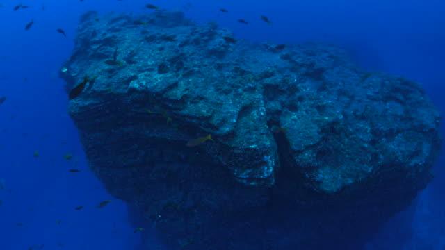 Undersea pinnacle video