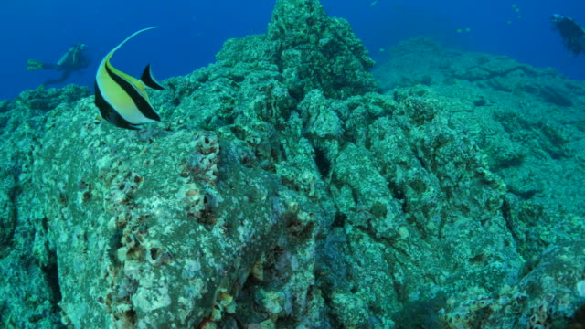 Undersea reef in subtropical sea video