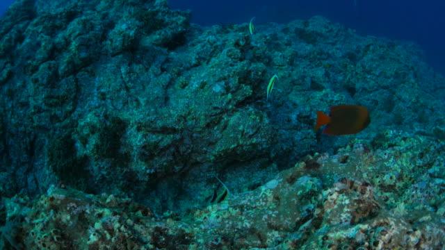 Undersea reef, Mexico video