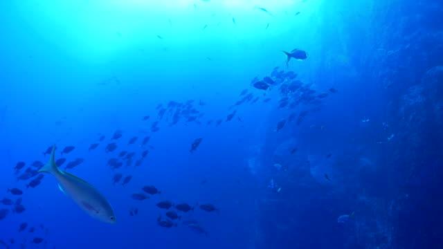 undervattenskabeln reef, fiskstim - bergsrygg bildbanksvideor och videomaterial från bakom kulisserna