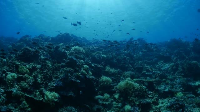vídeos y material grabado en eventos de stock de peces de arrecife submarino, besugo - sea life park