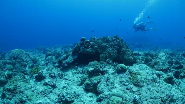 vídeos y material grabado en eventos de stock de submarina buceo en arrecife de coral - micronesia
