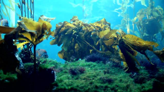 Mundo submarino de agua - vídeo