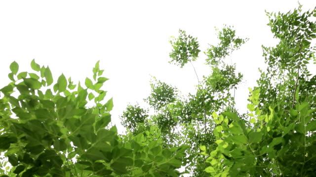 undersidan av bladen - gren plantdel bildbanksvideor och videomaterial från bakom kulisserna