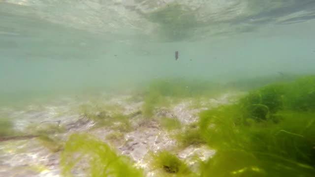 underwater and final landscape - zanzibar - ekvatorn latitud bildbanksvideor och videomaterial från bakom kulisserna