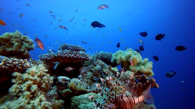 Underwater Beautiful Scene Tropical blue sea water. Coral garden seascape. Sea waves. Underwater world life. Tropical underwater seascape. Reef coral scene. Colourful tropical coral reef coral cnidarian stock videos & royalty-free footage