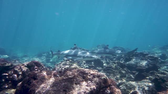 stockvideo's en b-roll-footage met onderwater dicht bij verscheidene haaien - eén dier