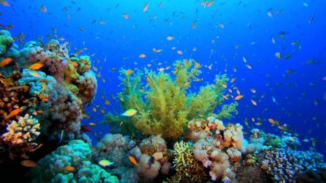 underwater colorful world - морская рыба стоковые видео и кадры b-roll