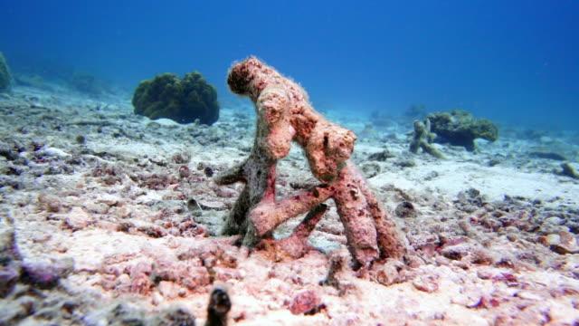 underwater korallblekning på döda korallrev - utdöd bildbanksvideor och videomaterial från bakom kulisserna
