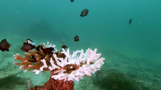 undervattens korall blekning progression i table korall miljöskador - utdöd bildbanksvideor och videomaterial från bakom kulisserna