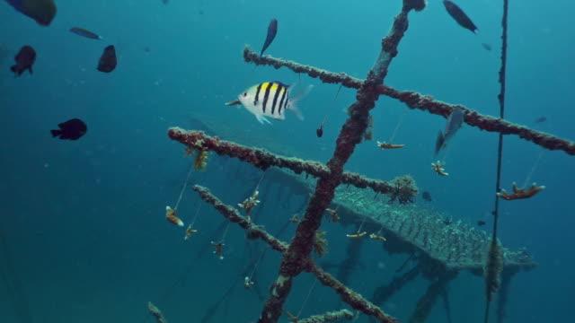 Unterwasserkorallenfragmente wachsen auf künstlichem Riff – Video