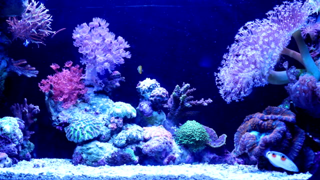 Underwater coral reef and  fishes.影片