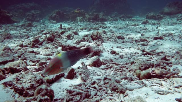 underwater coral reef mass bleaching and destruction - morte video stock e b–roll