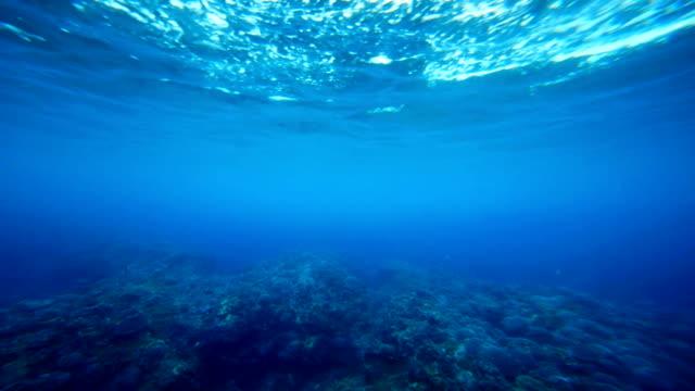 Underwater Coral Reef Seamless Loop Footage Underwater Coral Reef Seamless Loop Footage ocean floor stock videos & royalty-free footage
