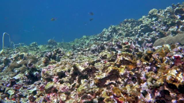 sualtı mercan resif mercan ağartma acı - ölü stok videoları ve detay görüntü çekimi