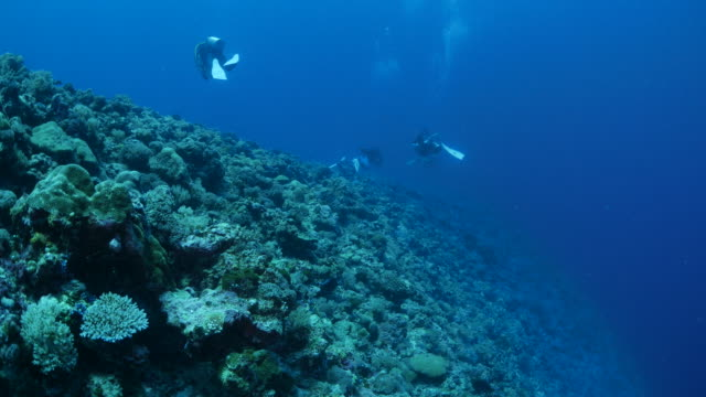 vídeos y material grabado en eventos de stock de arrecife de coral bajo el agua - zona pelágica