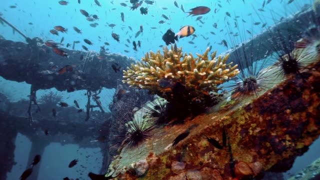 vídeos y material grabado en eventos de stock de arrecife artificial de turismo ecológico subacuático, proyecto de restauración de viveros de coral, viking bay, isla phi phi, tailandia - vida sostenible