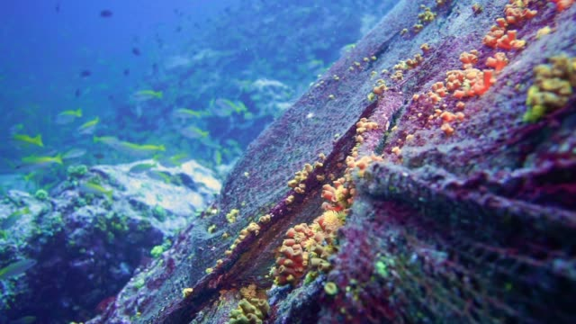 Underwater environmental damage abandoned fishing 'ghost nets' polluting the Ocean