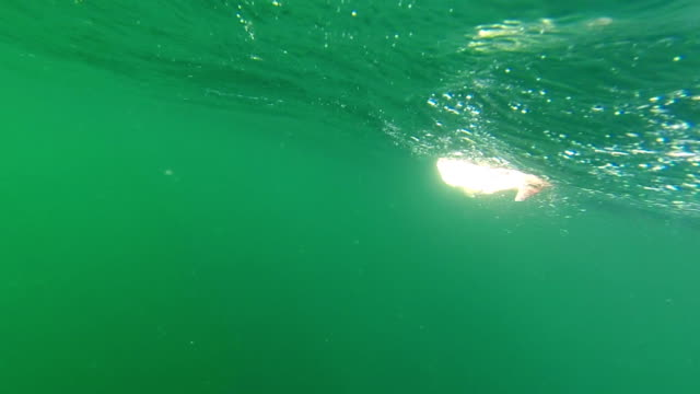 Underwater fish on hook. (New Zealand Snapper.) Recreational sea fishing. video