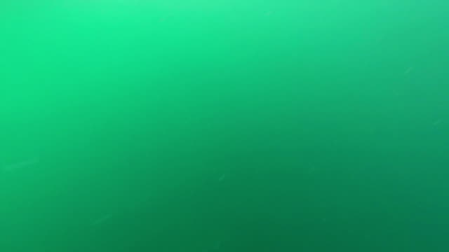 fisch auf hook. (neuseeland snapper.) freizeitaktivitäten für das hochseefischen. - angelhaken stock-videos und b-roll-filmmaterial