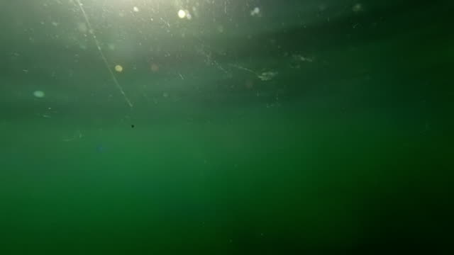 Underwater floating particles. Plankton rich sea water. New Zealand. video