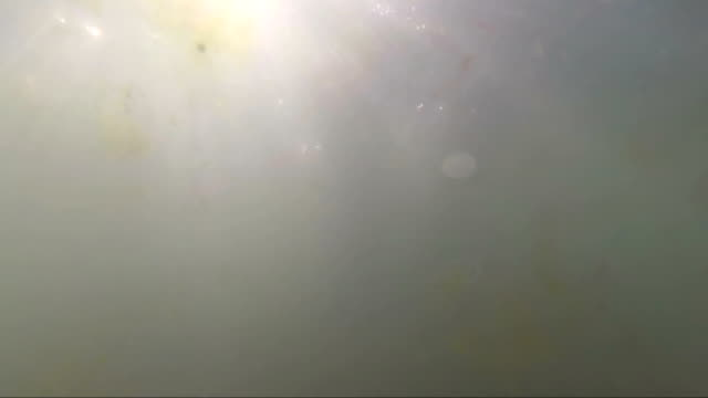 Underwater footsteps of a boy in the shallow muddy water in the sea, seaweed video