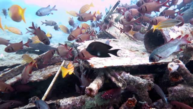 Underwater Junkyard video