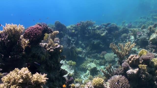 Onderwater landschap van koraalrif. Rode Zee. video